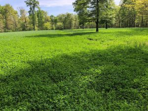 Food Plots are a Family Affair in MS - Columbus/MS