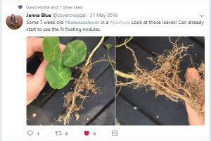 FIXatioNClover Jenna Blue @CoverCropGal - Lacrosse/WI