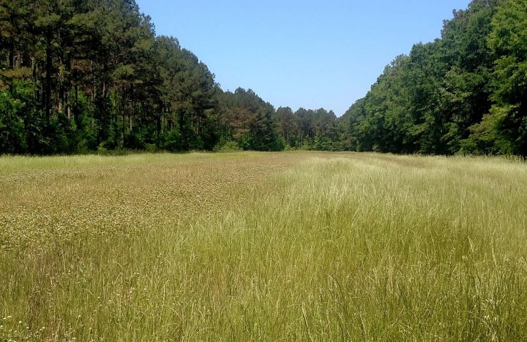 A game changer for deer and turkey - Starkville/MS