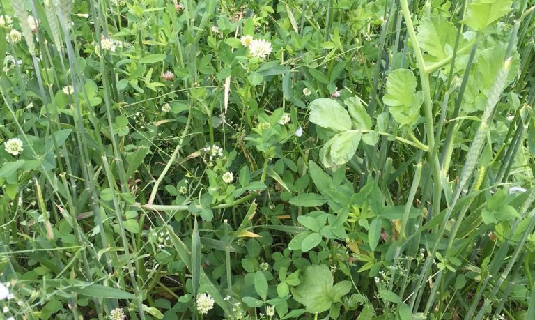 FIXatioN in pasture mix with no amendments - Jefferson/OR
