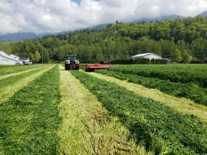 FIxatioN Silage - British Columbia/CAN
