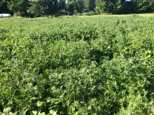 FIXatioN as part of Pastures for Pollinators