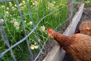 A cover crop salad bar!