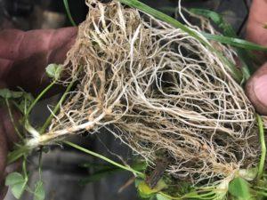 A big focus on soil health- Loudonville