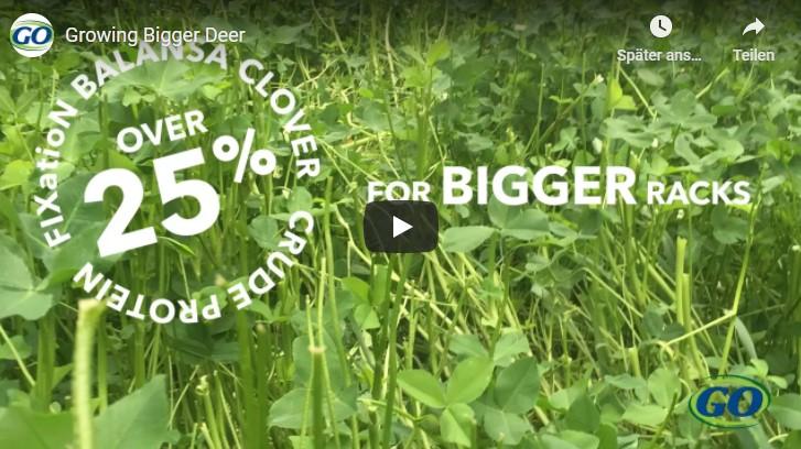 Growing Bigger Deer with Fixation Clover